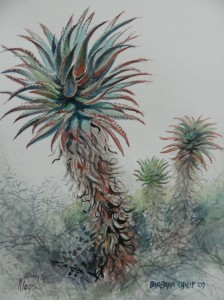 Many aloes, possibly,Aloe Ferox, an interesting study.