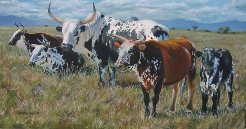 Photo of the Nguni oil taken outside to convey the true colours.