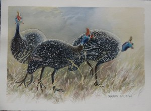 Three Guinea Fowl arriving for feeding time
