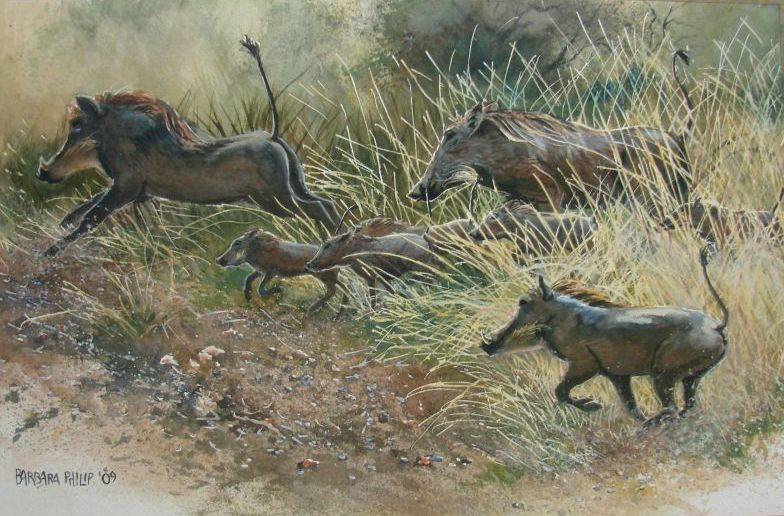 Warthog group running.(515 x 330 mm. Watercolour on stretched watercolour paper.)