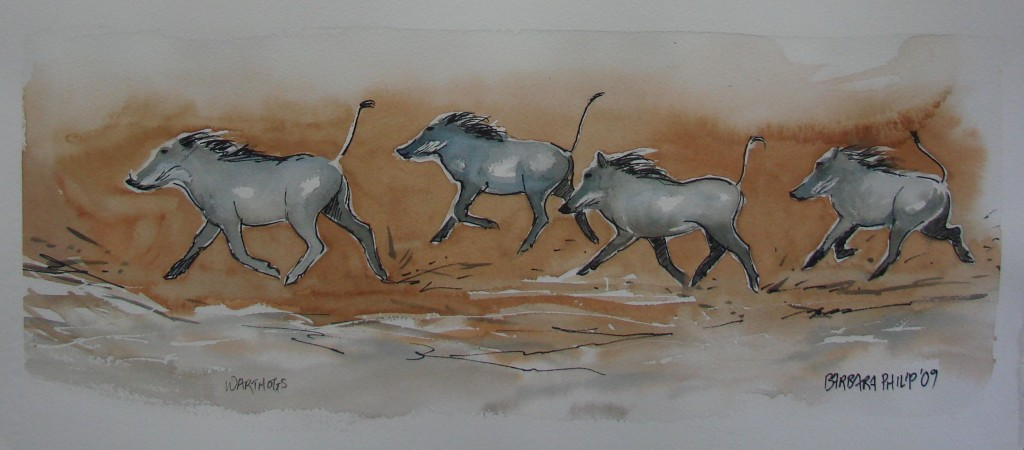 Warthogs.(560 x 250 mm. Pencil and wash sketch, on unstretched watercolour paper.)