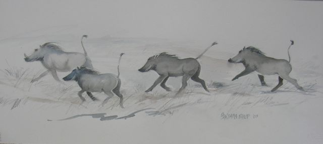 Warthogs. (560 x 250 mm. Pencil and wash sketch, on unstretched watercolour paper.)