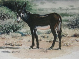 Donkey. watercolour. 225 x 160 mm