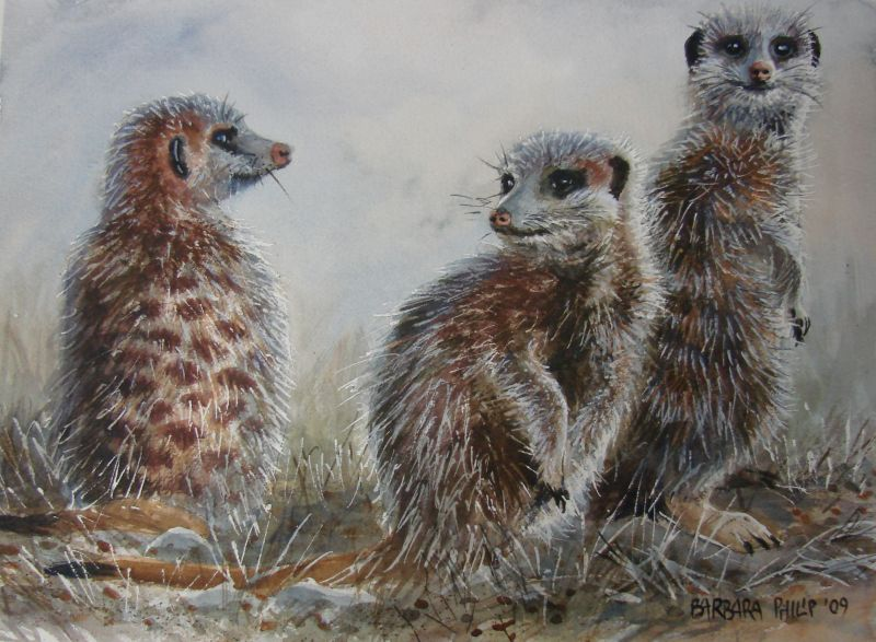 Three Meercats. Watercolour on Saunders Waterford. 340 x 250 mm.