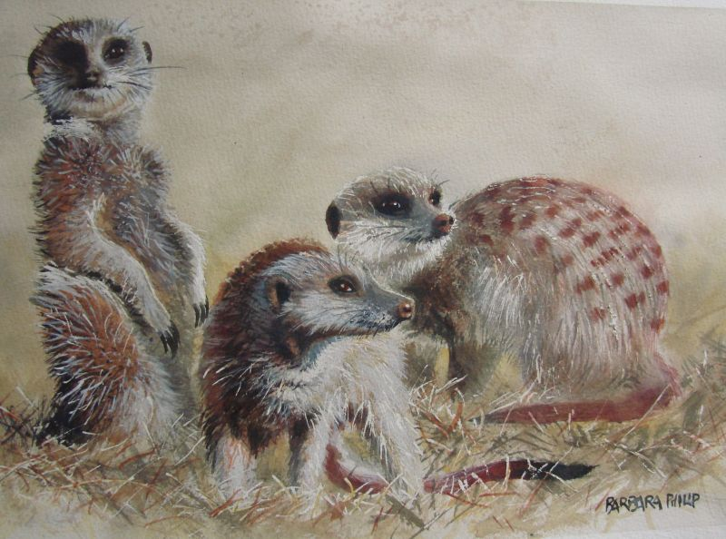 Three Meercats 2, Watercolour on Saunders Waterford, 340 x 250 mm.