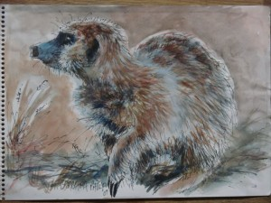 Meercat Sketch 3, Pen & Wash on Cartridge Paper. 290 x 210 mm.