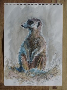 Meercat sketch 4, Pen & Wash on Cartridge paper, 290 x 210 mm