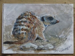 Meercat, pen & wash sketch on cartridge paper. 290 x 210mm