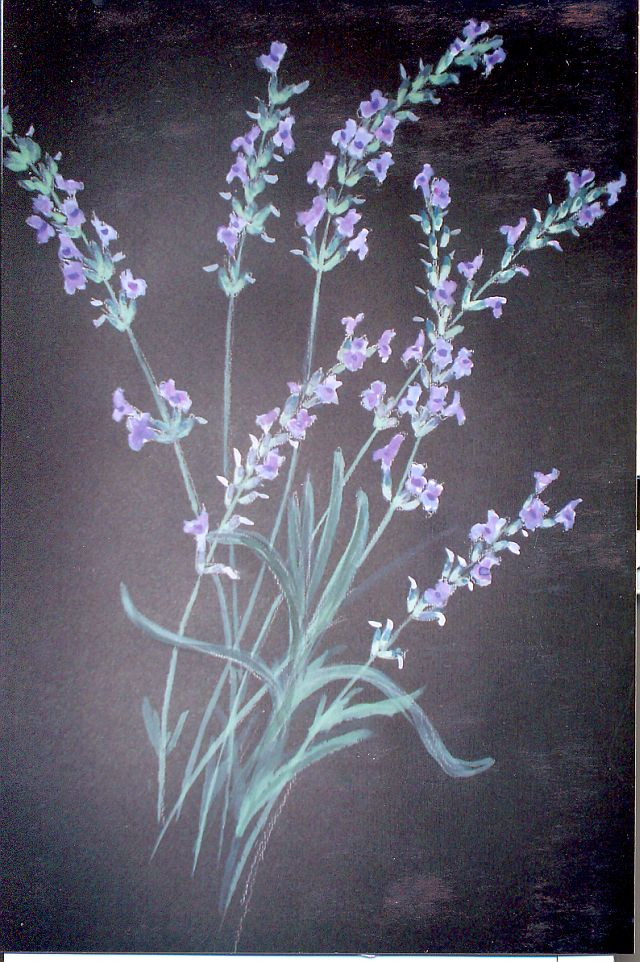 Lavender On Black Paper 187 Barbara Philip African Painting